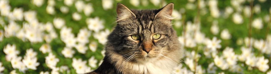 Tip 5 katten in de tuin max vandaag for Kattenpoep in de tuin