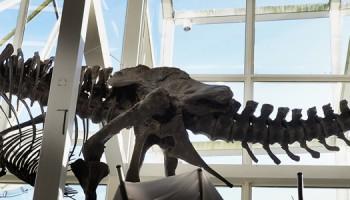 LEIDEN - Levensechte T. rex op station Leiden Centraal / Start crowdfunding campagne voor echte T. rex. ANP LEX VAN LIESHOUT