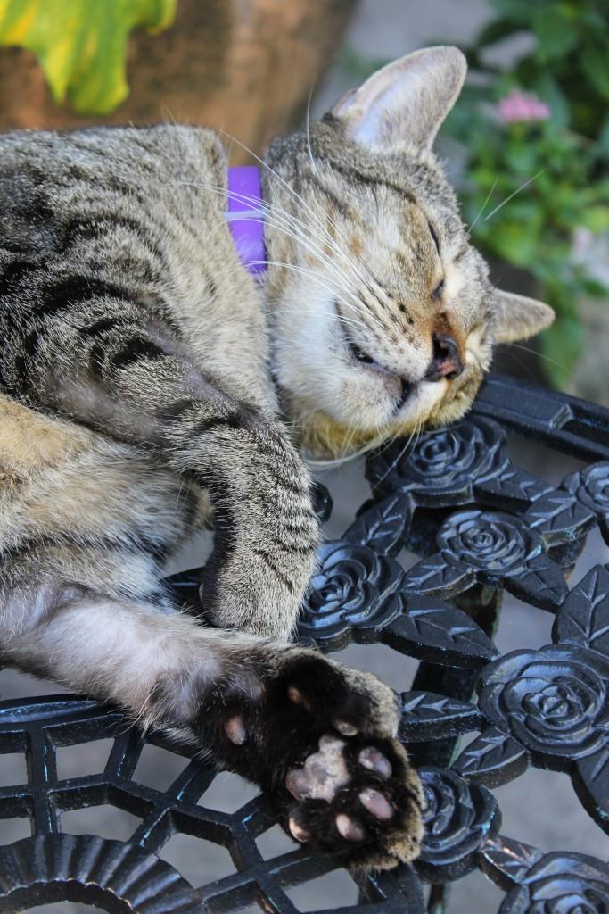 Hemingway kat