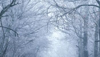 winters_vorst_shutterstock-1100x300