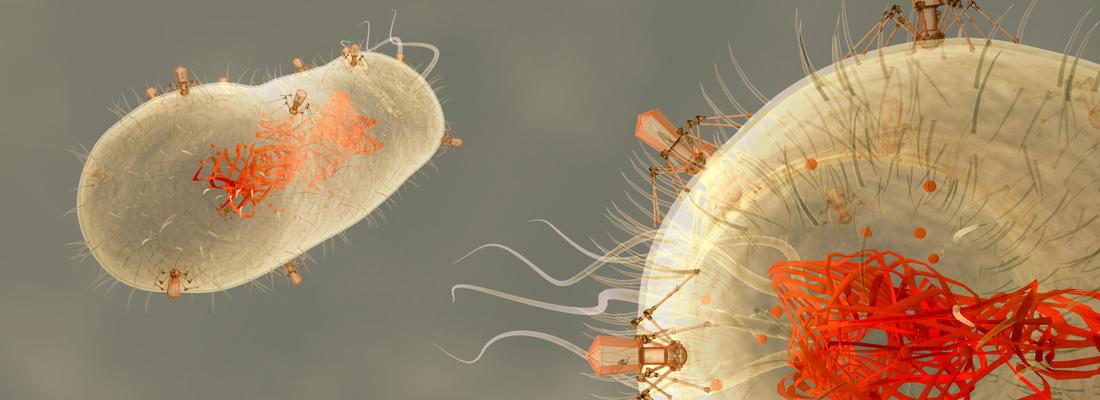 bacteriofagen