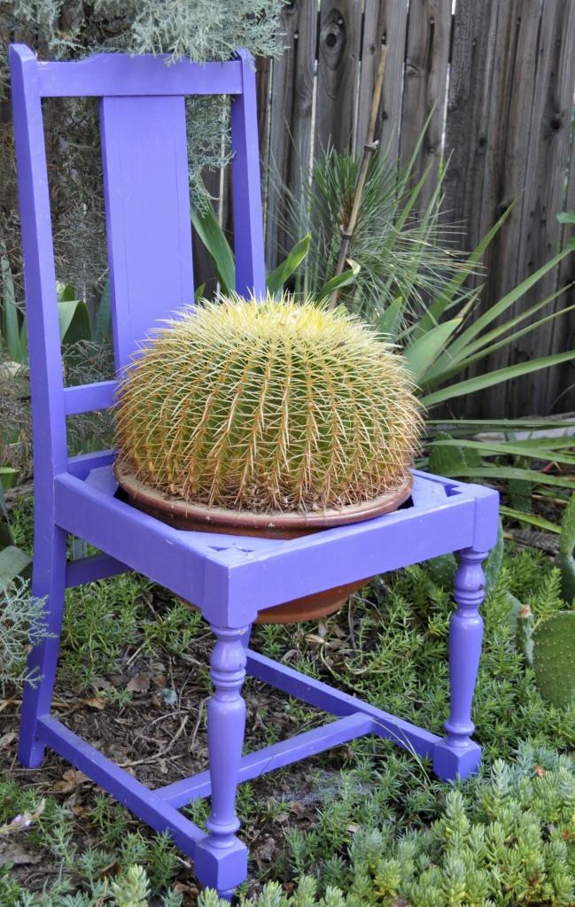 echinocactus_schoonmoederstoel_shutterstock