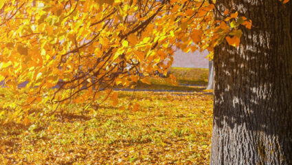 oktoberwarmte