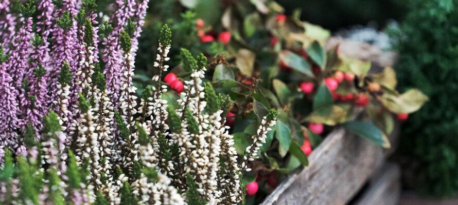 bloembakken