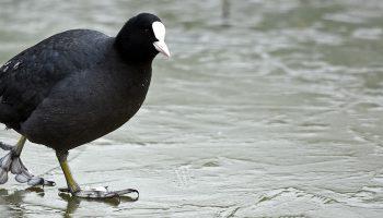 Bevriezen vogelpootjes