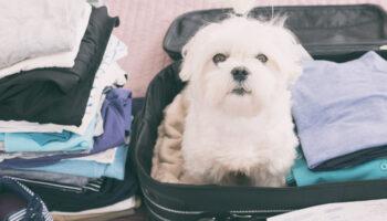 huisdier mee op reis