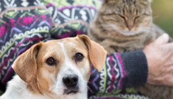 dementie bij dieren
