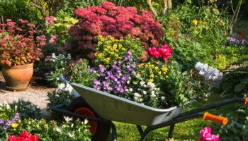 tuin in de herfst