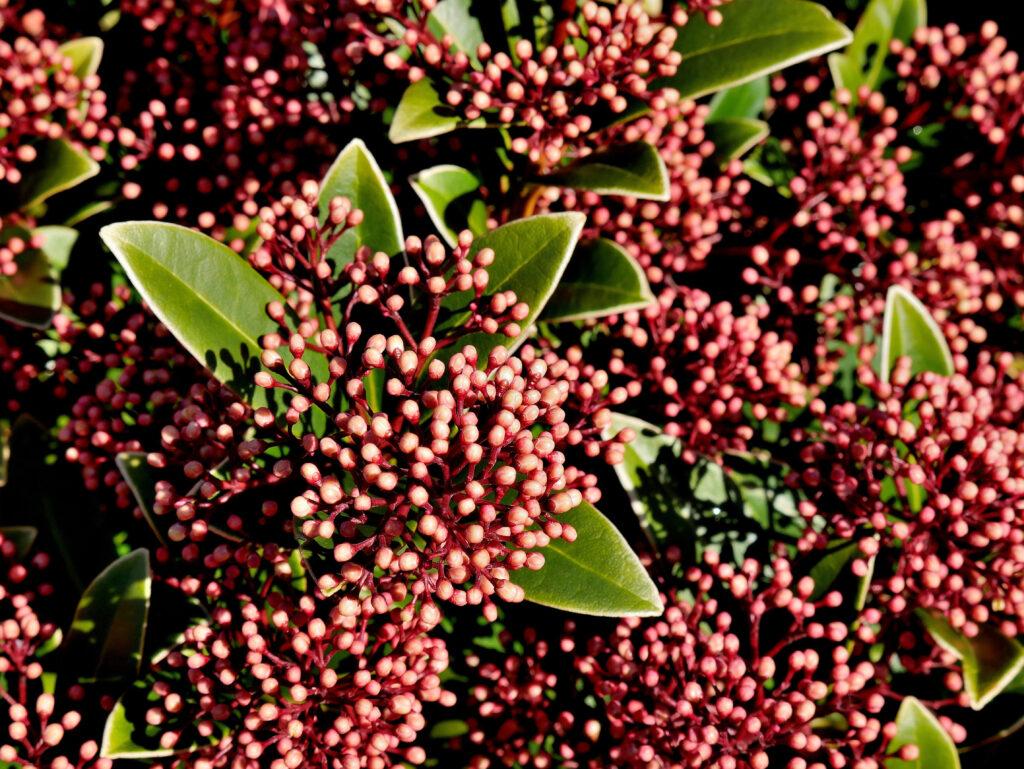 herfstbloeiers