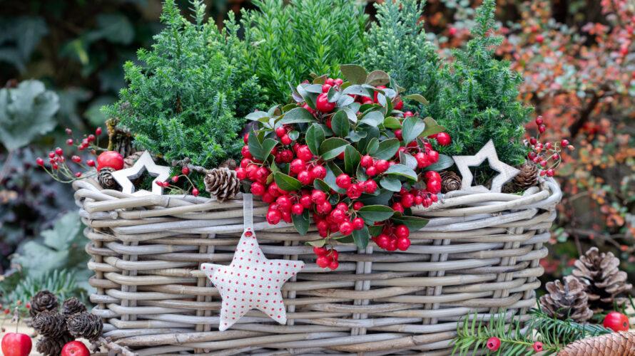 groen voor kerstsfeer