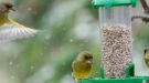vogels in tuin