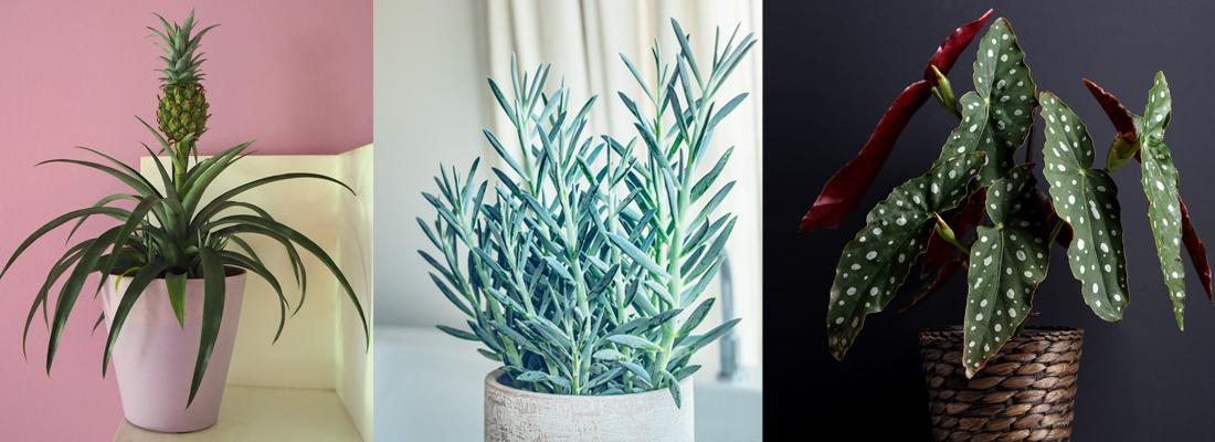 kamerplanten