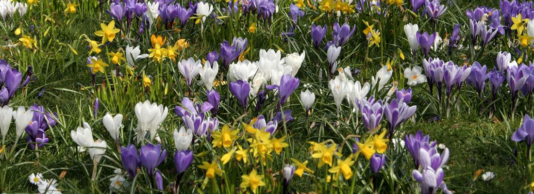 natuur vroeg in bloei