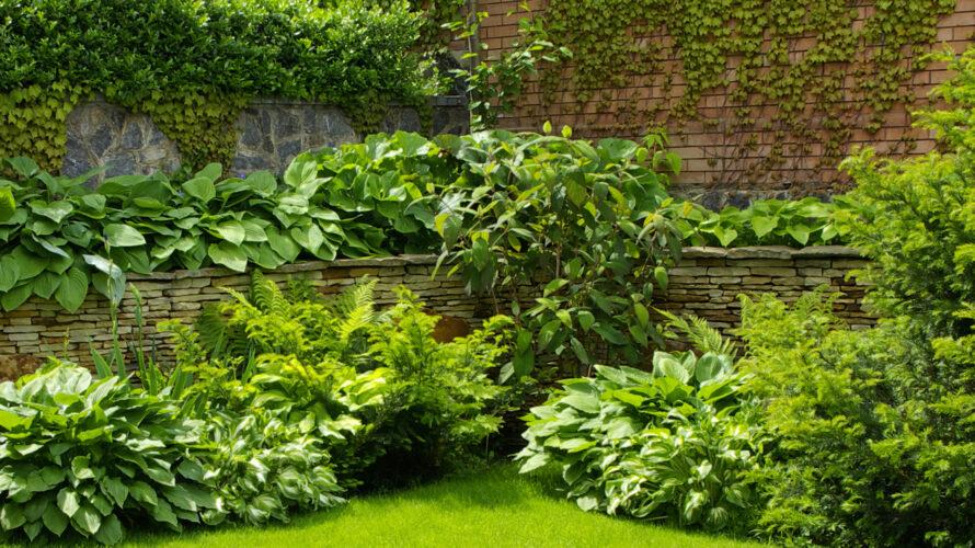 schaduwrijke tuin