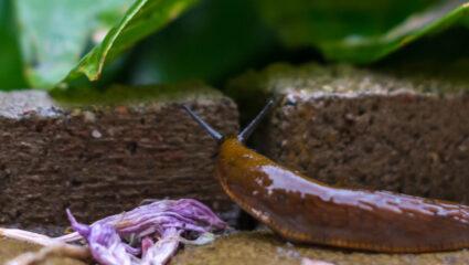 Slakken bestrijden