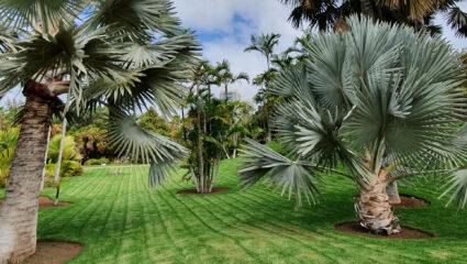 Tuinbezoek Tenerife
