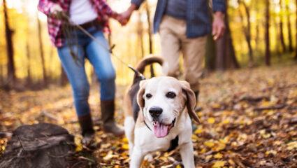 dennenappels gevaarlijk voor de hond