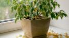 kamerplanten gele bladeren