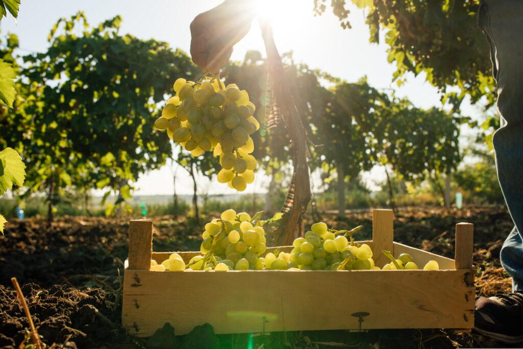 natuurwijn