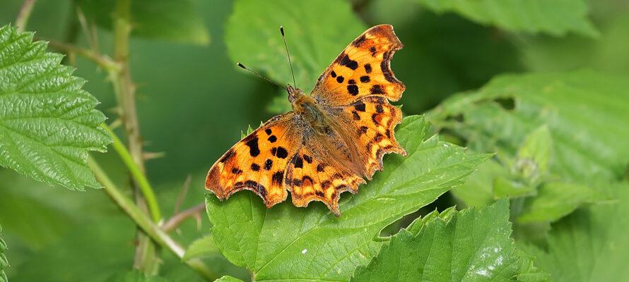 vlinders in het najaar