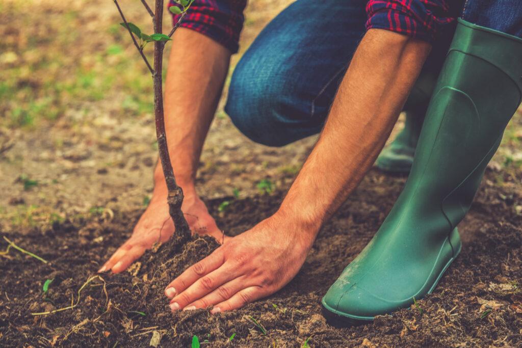 planten aanplanten