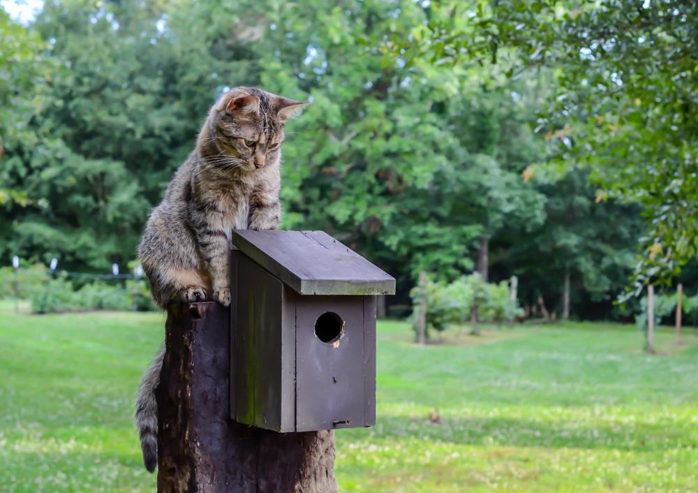 katten en vogelhuisje