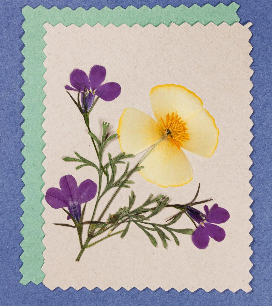 droogbloemen kaart