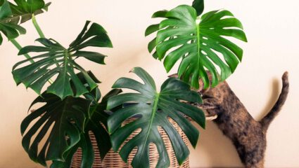 gatenplant met kat