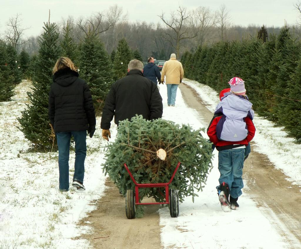 kerstboom kappen