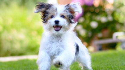 gelukkige hond