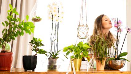 geurende kamerplanten