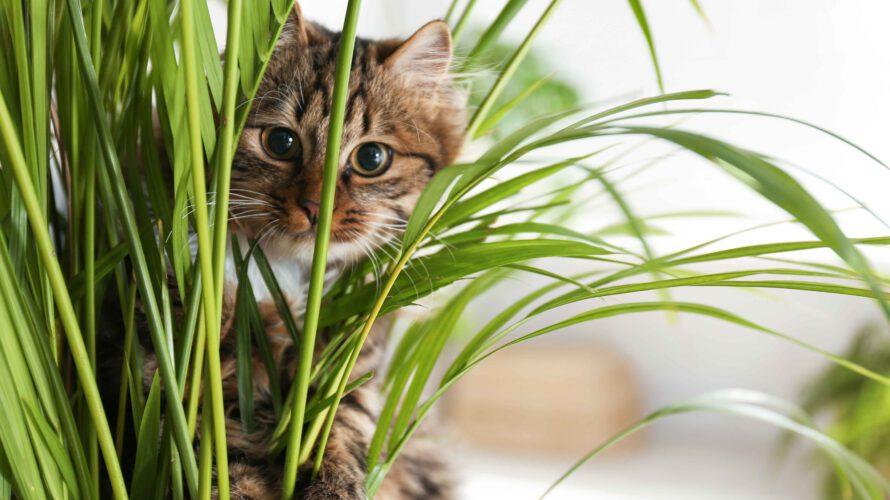 niet giftige kamerplanten