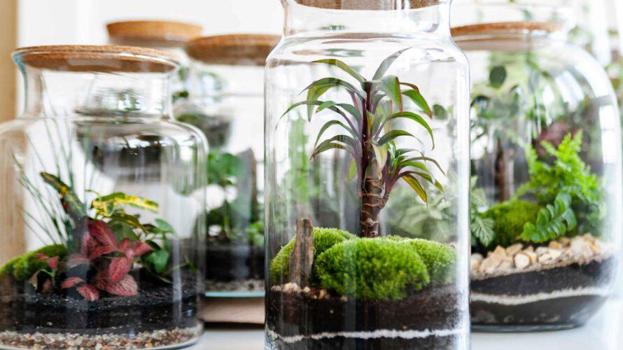 planten terrarium