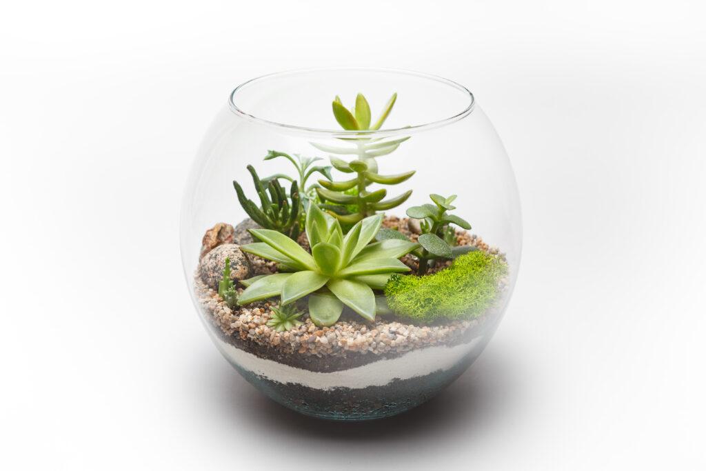 vetplanten terrarium