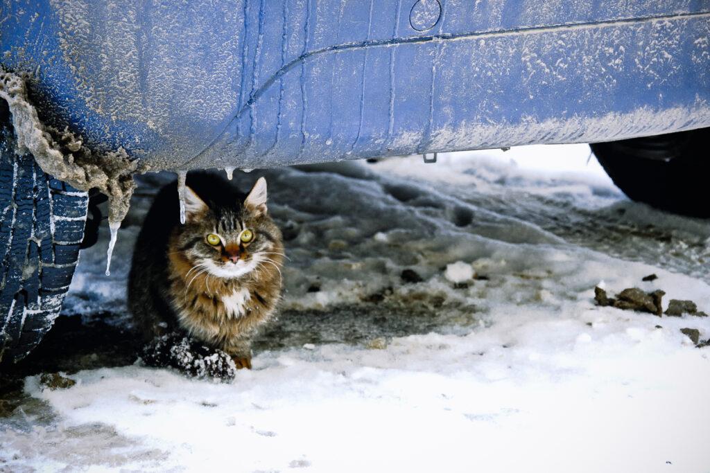 kat winter
