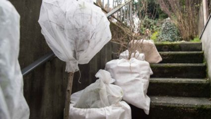 vorst bescherming tuinplanten