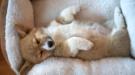 hond slaapplaats huis