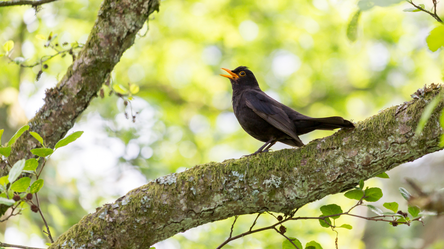 vogel fluiten