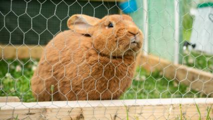 konijn gelukkig