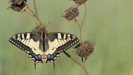 vlinderpuzzel