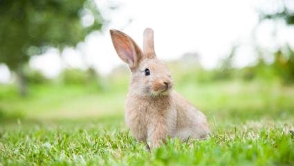 puzzel konijn