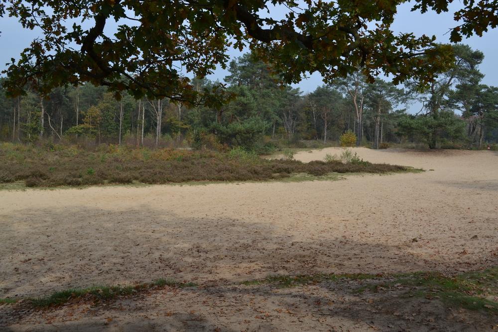Zandvlakte bij Bakkeveen