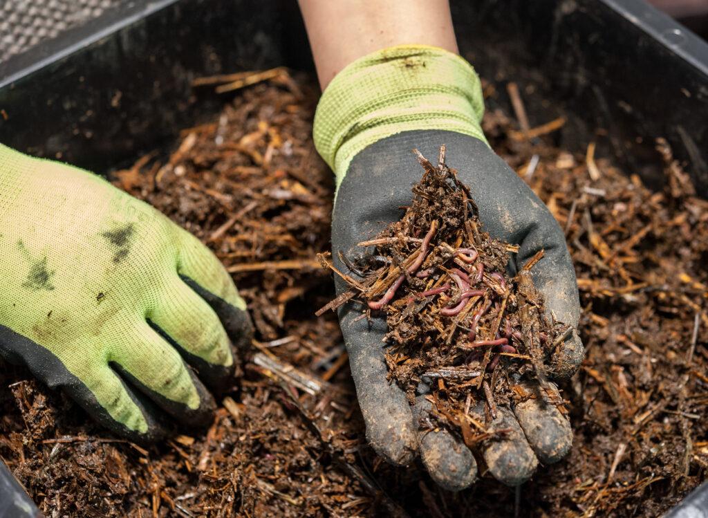 compost wormen