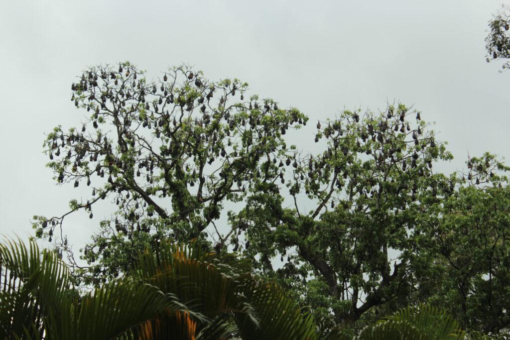 botanische tuin, Sri Lanka