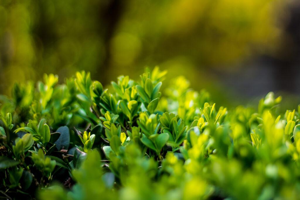 groentips