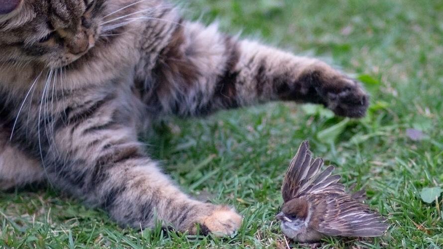 gedode vogels