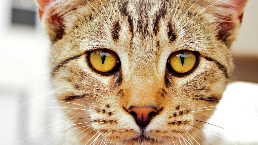 kat ogen